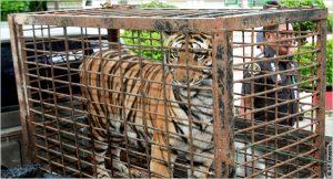 Resultado de imagen para trafico de animales salvajes