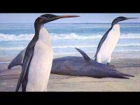 Alca Gigante, el auténtico pingüino