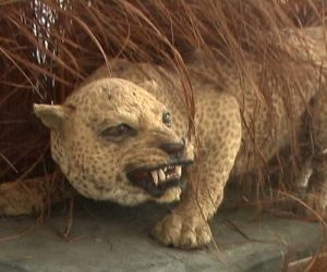 Leopardo de Zanzibar portada