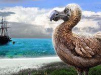 El Pájaro Dodo, una trágica historia que lo llevo a su extinción