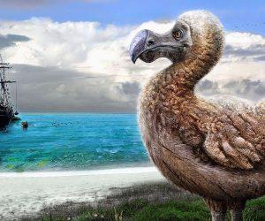 pajaro dodo portada