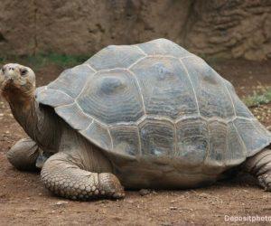 tortuga de los galapagos portada