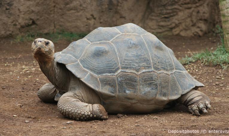Tortuga de los Galápagos, testigo silente de su exterminio